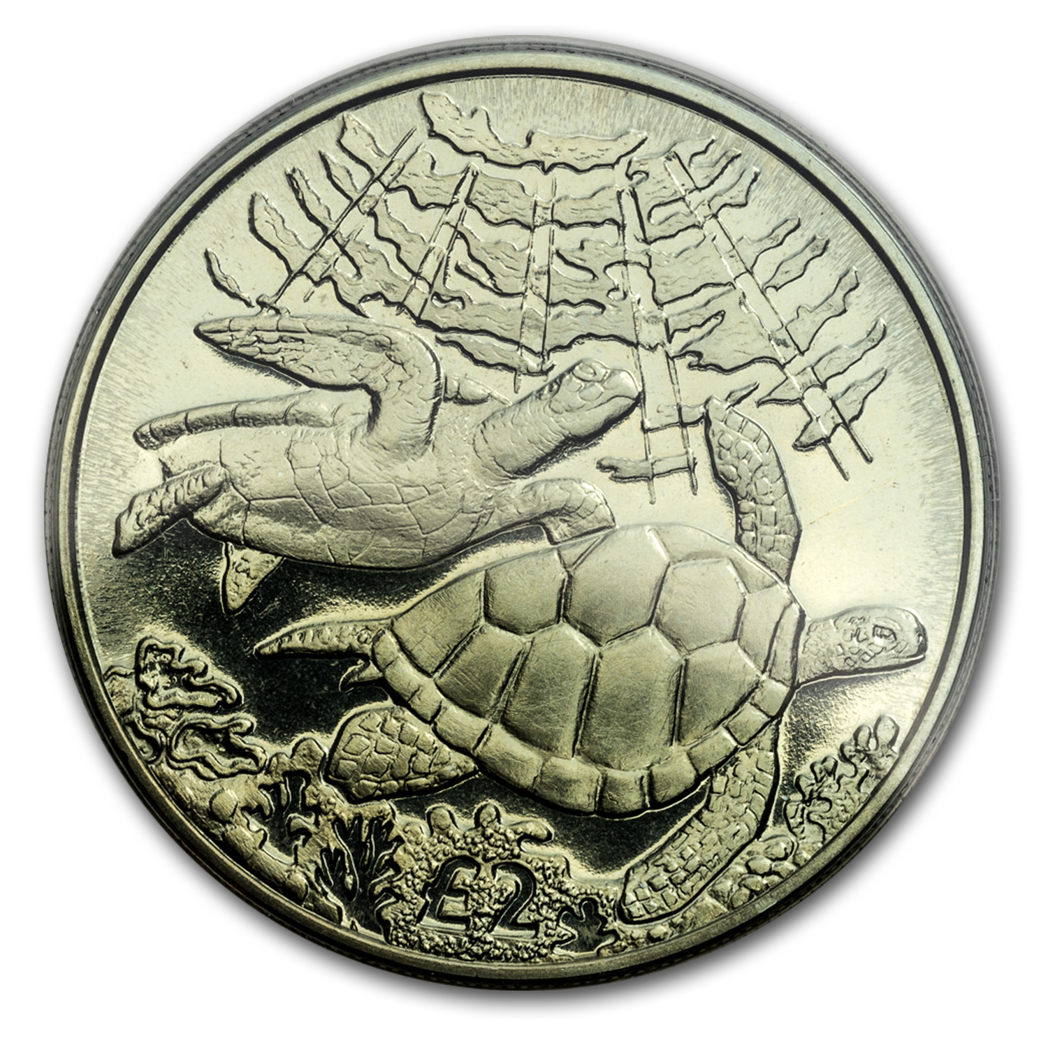 2017 British Indian Ocean Territory 1/3 oz Green Titanium Turtle