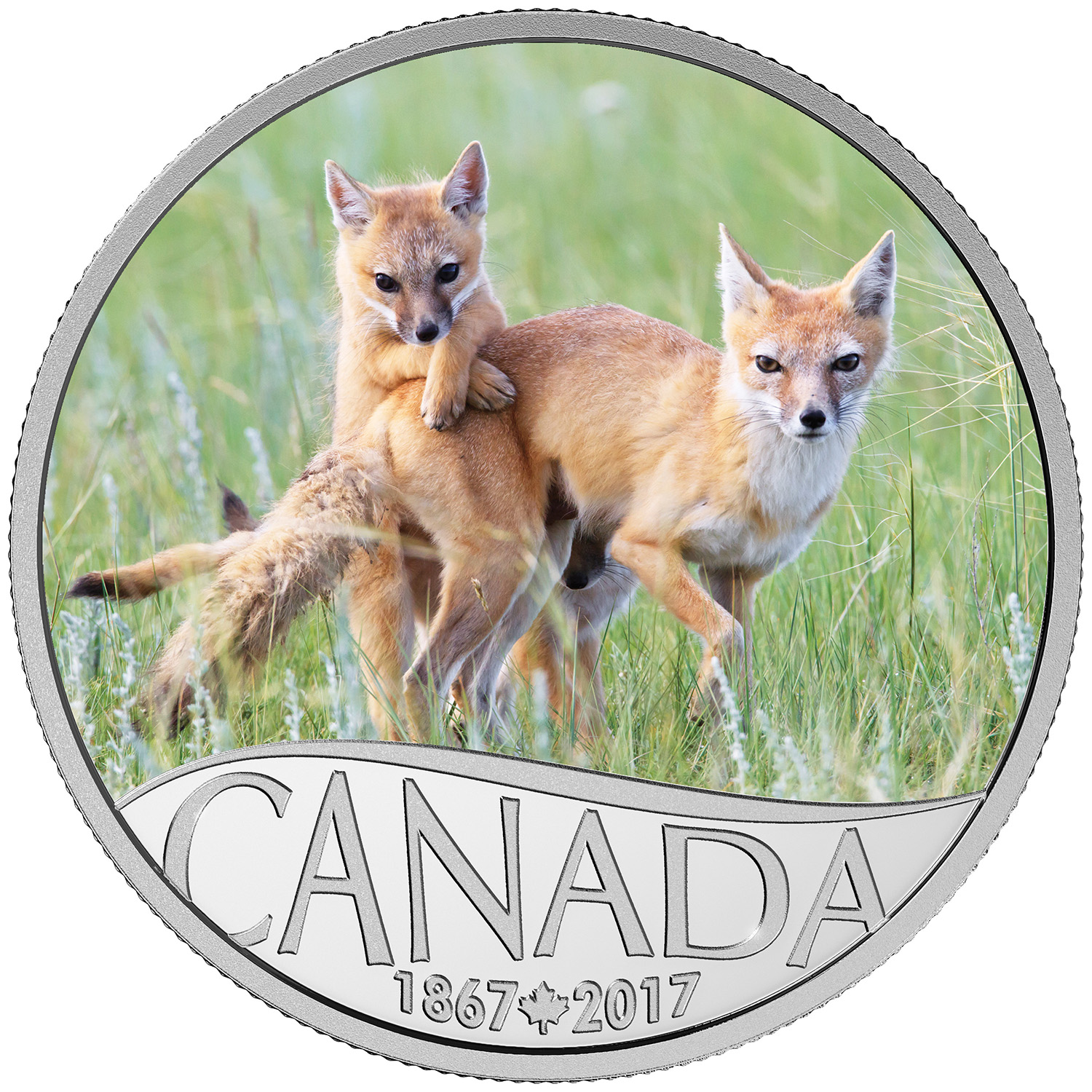 2017 Can 1/2 oz Silver $10 Canada's 150th: Wild Swift Fox & Pups