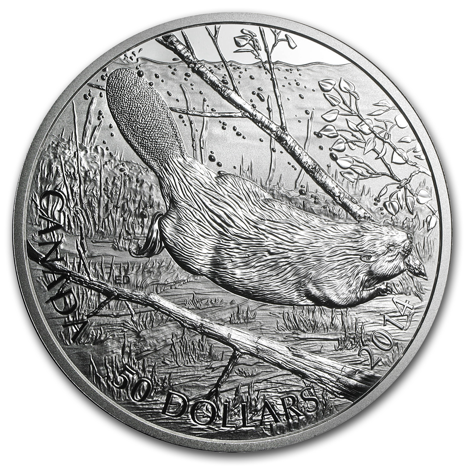 2014 5 oz Silver Canadian $50 Coin - Swimming Beaver