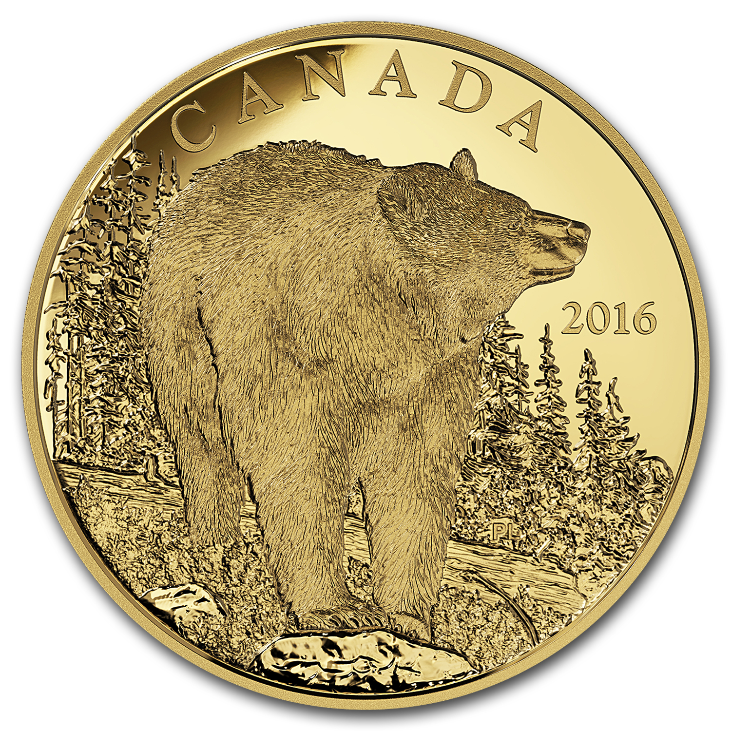 2016 Canada 1 oz Proof Gold $350 Bold Black Bear