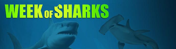 Week of sharks