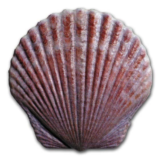 2019 Fiji 10 gram Silver Castaway Colorized Seashell Proof